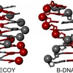 Decoy molecules represent potential cure for HIV