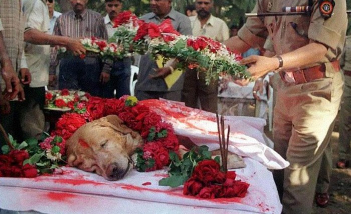 Zanjeer the bomb dog is laid to rest with full military honours for saving thousands of lives. [2000] Source: Pune Mirror