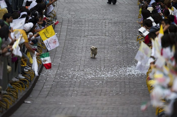 A dog soaks in an adoring crowd in Mexico by following the Pope [2011] Source: Yuri Cortez